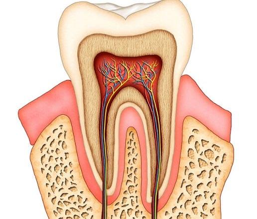 canal-dentário-01